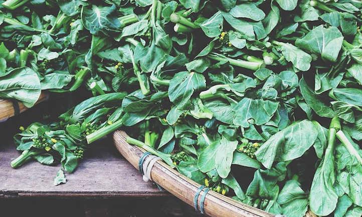 Growing Chinese broccoli