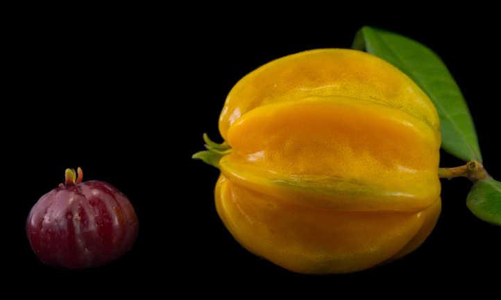 Savanna pitanga vs pitangatuba