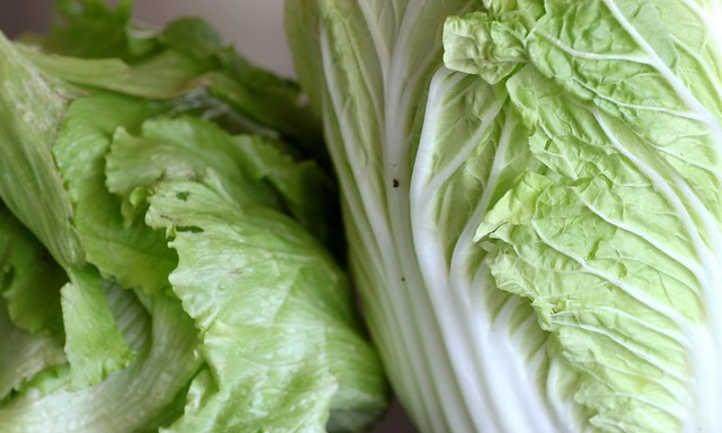 Thick midrib on napa cabbage