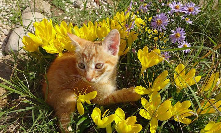 Cat in flower bed