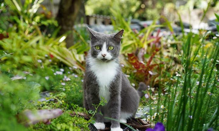 Cat relaxing among plants