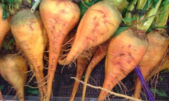 Gold ball turnips
