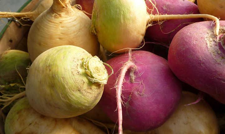 Harvested turnips