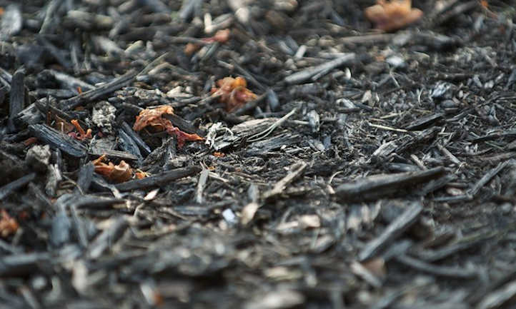 Dyed wood chip mulch