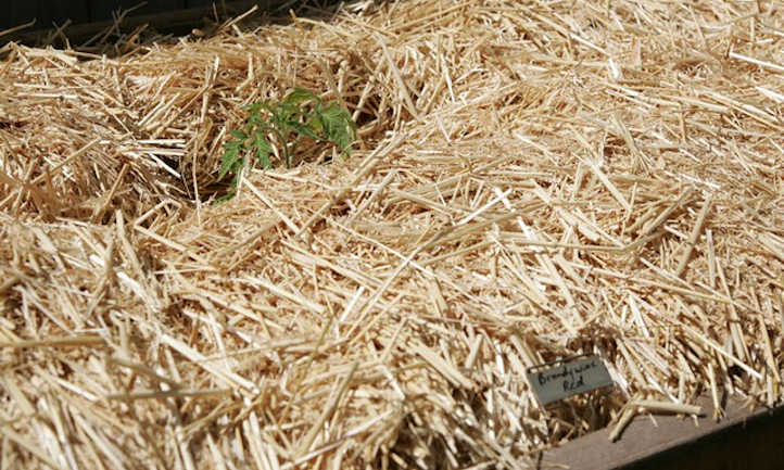 Types of mulch