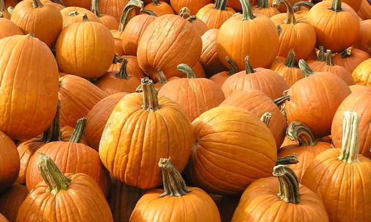 Field pumpkins
