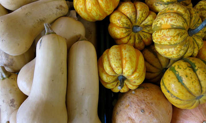 Two winter squashes
